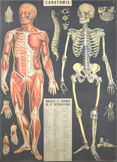 Affiche vintage  CORPS HUMAIN ANATOMIE Dimensions : 70 x 50 cm