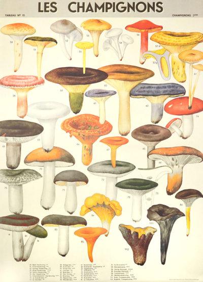 Affiche vintage  BOIS CHAMPIGNONS Dimensions : 70 x 50 cm