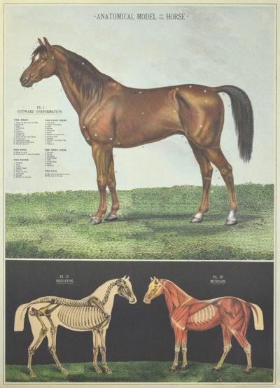 Affiche vintage  NATURE CHEVAUX Dimensions : 70 x 50 cm