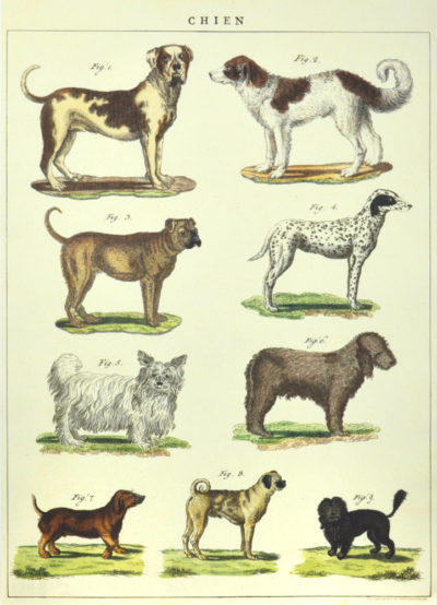 Affiche vintage  NATURE CHIENS Dimensions : 70 x 50 cm