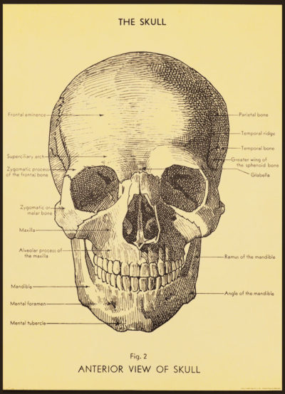 Affiche vintage  ANATOMIE CRANE HUMAIN Dimensions : 70 x 50 cm