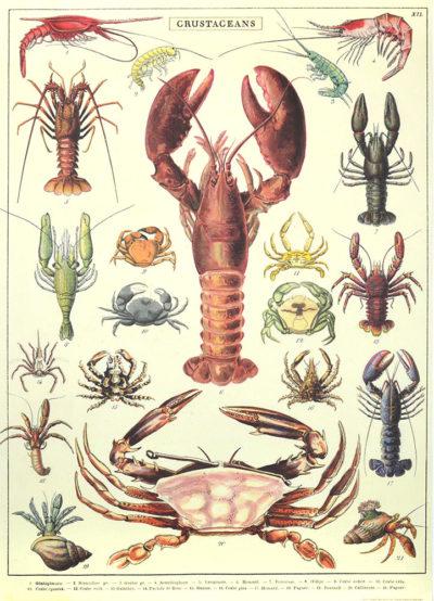 Affiche vintage  MER CRUSTACES Dimensions : 70 x 50 cm