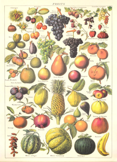 Affiche vintage  NATURE FRUITS Dimensions : 70 x 50 cm