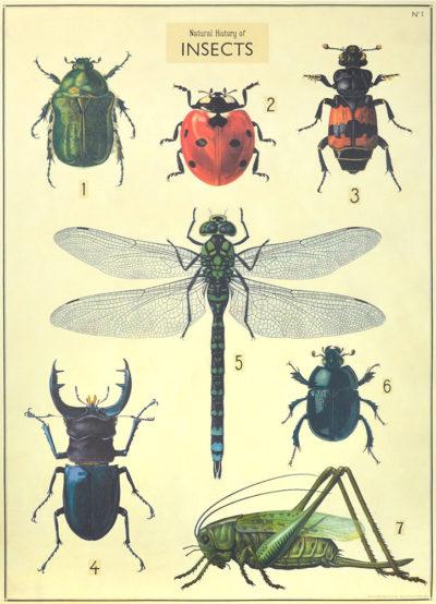 Affiche vintage  INSECTES PLANCHE 2  Dimensions : 70 x 50 cm
