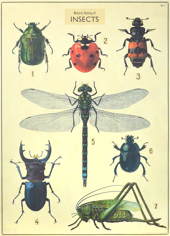 INSECTES PLANCHE 2
