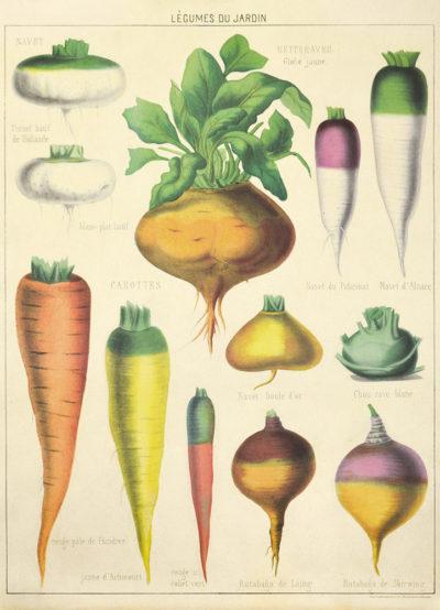 Affiche vintage  NATURE LEGUMES Dimensions : 70 x 50 cm