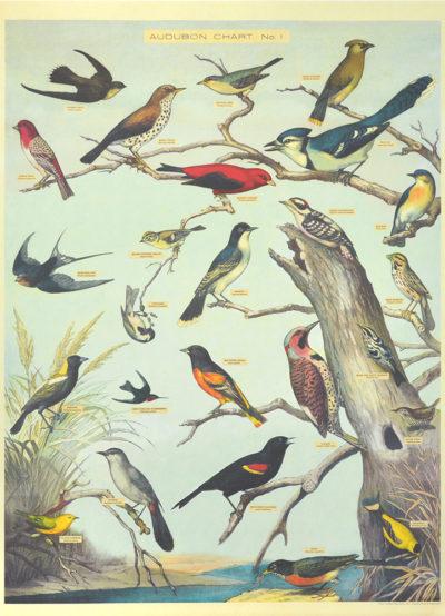 Affiche vintage  NATURE OISEAUX PAR AUDUBON Dimensions : 70 x 50 cm