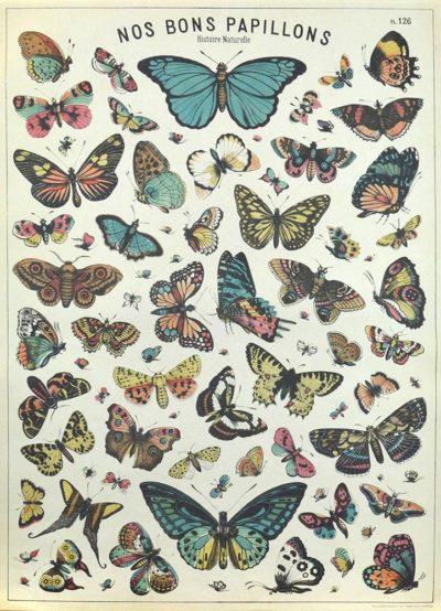 Affiche vintage  NATURE PAPILLONS PLANCHE 2 Dimensions : 70 x 50 cm