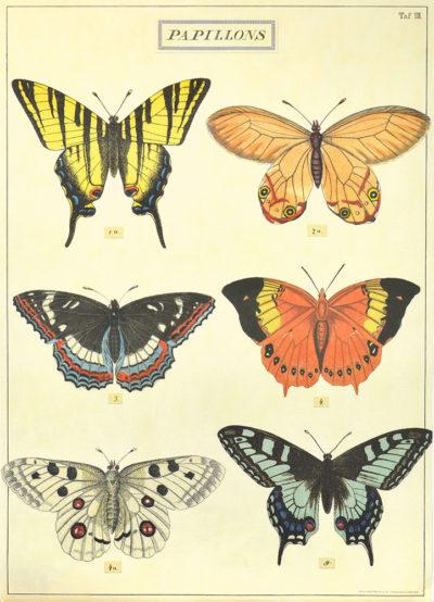 Affiche vintage  NATURE PAPILLONS PLANCHE 1 Dimensions : 70 x 50 cm