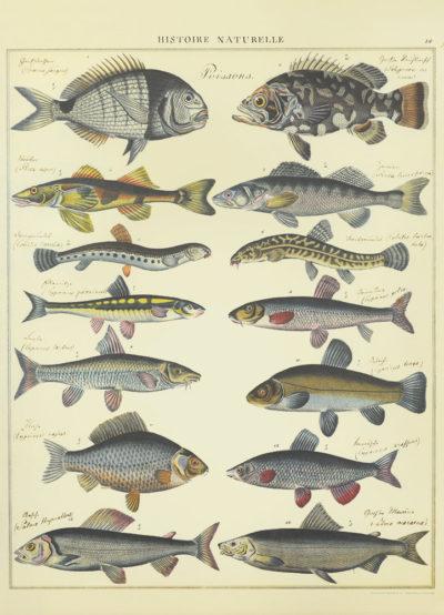 Affiche vintage  MER POISSONS Dimensions : 70 x 50 cm